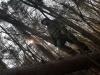 FiliP wchodzi na zwalone drzewo